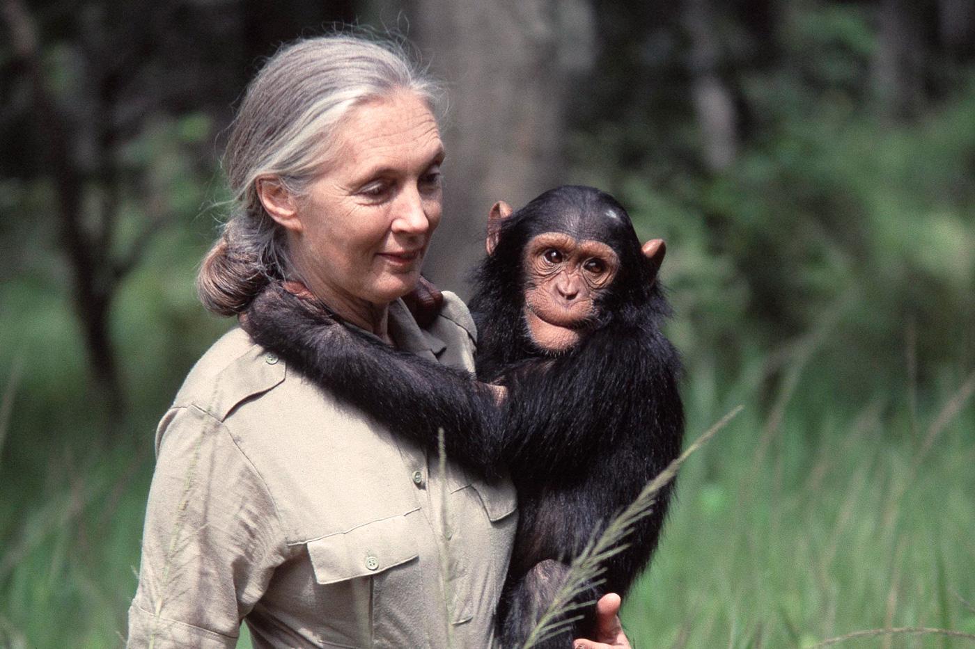 Jane Goodall: Un proyecto Edelvives para el aula